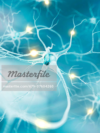 Active nerve cells, computer artwork. Stock Photo - Premium Royalty-Free, Image code: 679-07604260