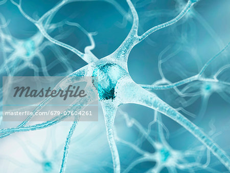 Nerve cell, computer artwork. Stock Photo - Premium Royalty-Free, Image code: 679-07604261