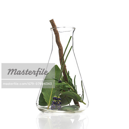 Medicinal plants, conceptual image. Stock Photo - Premium Royalty-Free, Image code: 679-07604343