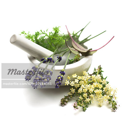 Medicinal plants, conceptual image. Stock Photo - Premium Royalty-Free, Image code: 679-07604351
