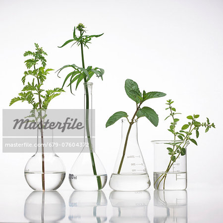 Medicinal plants, conceptual image. Stock Photo - Premium Royalty-Free, Image code: 679-07604372