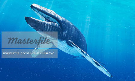 Blue whale, computer artwork. Stock Photo - Premium Royalty-Free, Image code: 679-07604757