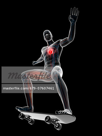 Male anatomy, computer artwork. Stock Photo - Premium Royalty-Free, Image code: 679-07607461