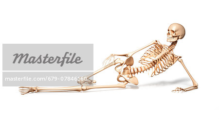 Human skeletal system, computer artwork. Stock Photo - Premium Royalty-Free, Image code: 679-07846160