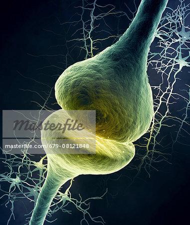 Synapse in the nervous system, computer illustration. Stock Photo - Premium Royalty-Free, Image code: 679-08121848