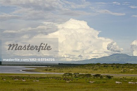 View across Lake Ndutu to Mount Lemagrut, Serengeti, Tanzania Stock Photo - Premium Royalty-Free, Image code: 682-03734725