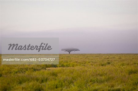 Early morning mist on Serengeti plains, Tanzanoa Stock Photo - Premium Royalty-Free, Image code: 682-03734727