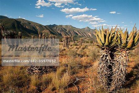 Desert landscape, Baviaans Kloof, Eastern Cape, South Africa