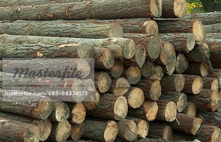 A wood pile at a sawmill. Western Cape Province, South Africa. Stock Photo - Premium Royalty-Free, Image code: 682-06374173