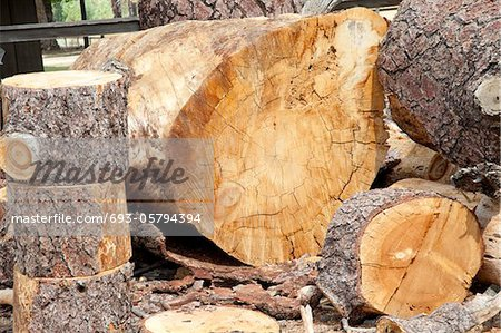 Chopped wooden logs Stock Photo - Premium Royalty-Free, Image code: 693-05794394