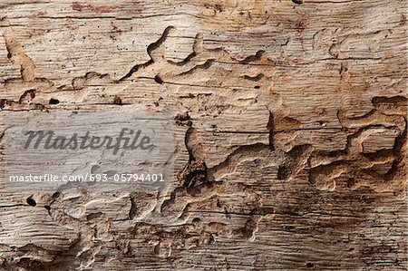 Close-up shot of wood grain pattern Stock Photo - Premium Royalty-Free, Image code: 693-05794401