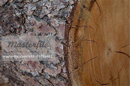 Extreme close-up view of tree bark Stock Photo - Premium Royalty-Free, Image code: 693-05794402