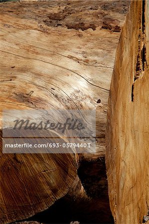 Close-up shot of stripped tree bark Stock Photo - Premium Royalty-Free, Image code: 693-05794403