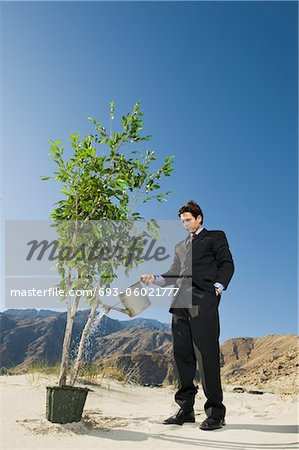 Businessman Watering Tree in the Desert Stock Photo - Premium Royalty-Free, Image code: 693-06021777