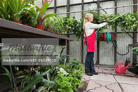 Side view of a senior florist spraying pesticide in greenhouse Stock Photo - Premium Royalty-Free, Image code: 693-06324013