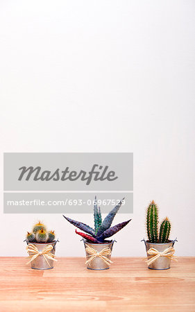 A variety of Cacti in pots Stock Photo - Premium Royalty-Free, Image code: 693-06967529