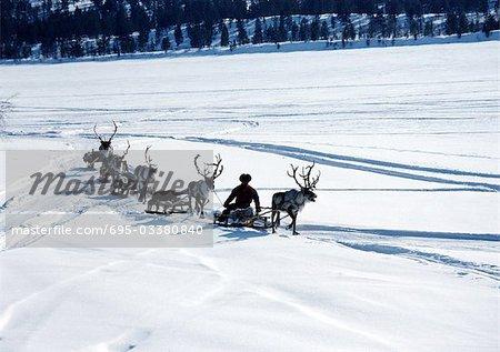 Finland, reindeer pulling sleds across snow