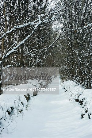 Tree-lined path in snow Stock Photo - Premium Royalty-Free, Image code: 695-03390557