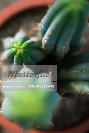 Cacti in flower pot, directly overhead, selective focus Stock Photo - Premium Royalty-Free, Image code: 695-03390638