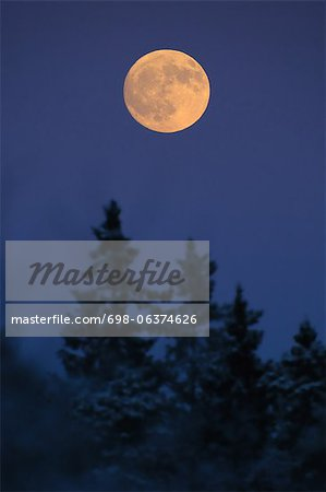 Scenic view of full moon on treetop in forest Stock Photo - Premium Royalty-Free, Image code: 698-06374626