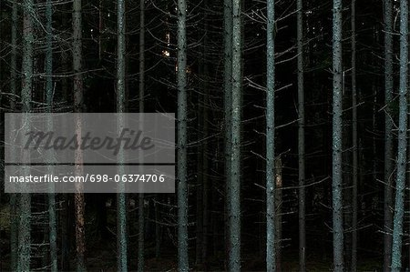 Bare tree trunks in dark forest Stock Photo - Premium Royalty-Free, Image code: 698-06374706