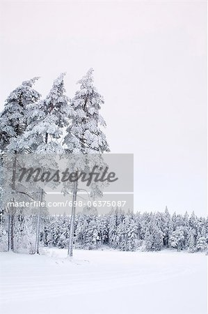 Snow covered landscape and trees against clear sky Stock Photo - Premium Royalty-Free, Image code: 698-06375087