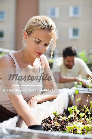 Young woman gardening at urban garden with man in the background Stock Photo - Premium Royalty-Free, Image code: 698-06444219
