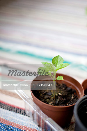 Potted plant in tray on mat Stock Photo - Premium Royalty-Free, Image code: 698-07158847