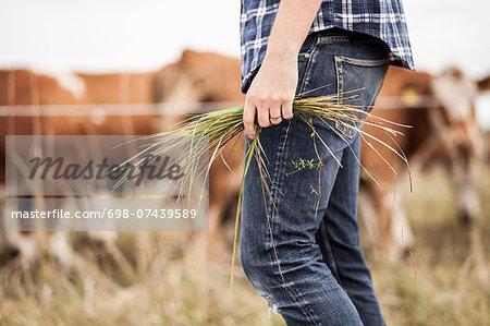 Midsection of farmer holding grass on field Stock Photo - Premium Royalty-Free, Image code: 698-07439589