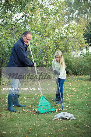 grandfather and granddaughter raking autumn leaves at yard Stock Photo - Premium Royalty-Free, Image code: 698-07587880