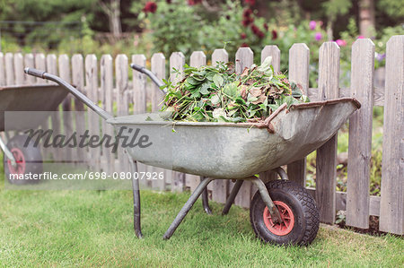 Wheelbarrow full of weeds at farm Stock Photo - Premium Royalty-Free, Image code: 698-08007926
