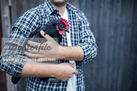 Midsection of man carrying hen at poultry farm Stock Photo - Premium Royalty-Free, Image code: 698-08007940