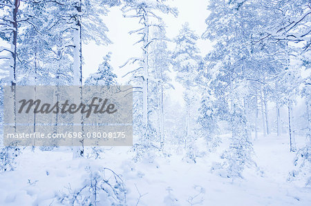 Snow covered trees and landscape in foggy weather Stock Photo - Premium Royalty-Free, Image code: 698-08008175
