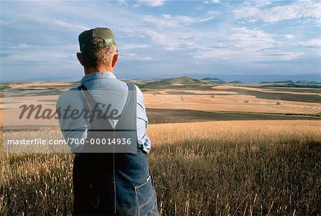 Farmer Looking Out at Wheat Field, South Dakota, USA
