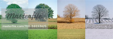 Tree in Spring, Summer, Autumn And Winter