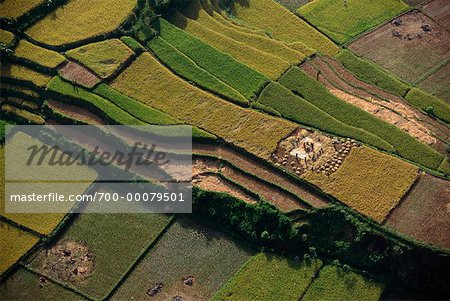 Aerial View of Terraced Rice Fields Bali, Indonesia Stock Photo - Rights-Managed, Image code: 700-00079501