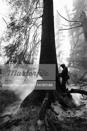 Man Cutting Down a Burning Tree Stock Photo - Rights-Managed, Image code: 700-00183186