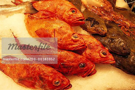 Fish Stock Photo - Rights-Managed, Image code: 700-00183952