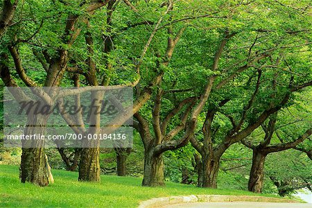Grove of Trees in Summer High Park Toronto, Ontario, Canada Stock Photo - Rights-Managed, Image code: 700-00184136