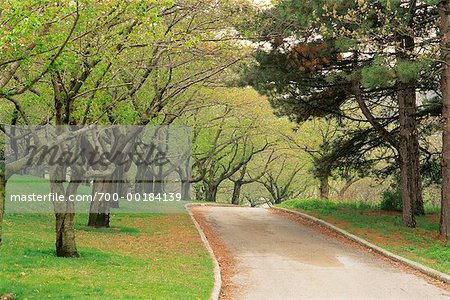 Tree-Lined Road in Springtime High Park Toronto, Ontario, Canada Stock Photo - Rights-Managed, Image code: 700-00184139