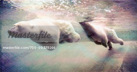 Polar Bears Swimming Stock Photo - Rights-Managed, Image code: 700-00378166
