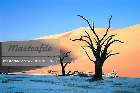 Dead Tree and Sand Dunes in Namib-Naukluft National Park, Namibia, Africa Stock Photo - Rights-Managed, Image code: 700-00560627