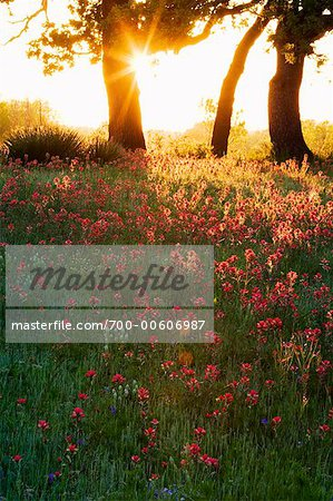 Sunrise Over Meadow, Texas Hill Country, Texas, USA