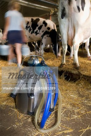 Portable Milking Machine in Barn Stock Photo - Rights-Managed, Image code: 700-00651289