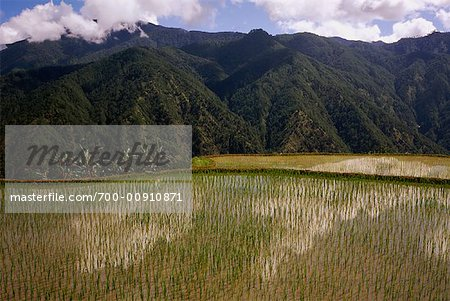 Terraced Rice Fields, Halsema Highway, Luzon, Philippines Stock Photo - Rights-Managed, Image code: 700-00910871