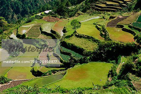 Rice Terraces, Halsema Highway, Benquet, Mountain Province, Luzon Philippines Stock Photo - Rights-Managed, Image code: 700-00910877