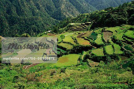 Rice Terraces Along Halsema Highway, Benguet, Luzon, Philippines Stock Photo - Rights-Managed, Image code: 700-00910878
