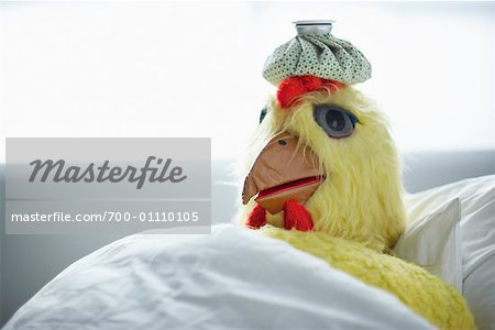 Sick Chicken Stock Photo - Rights-Managed, Image code: 700-01110105