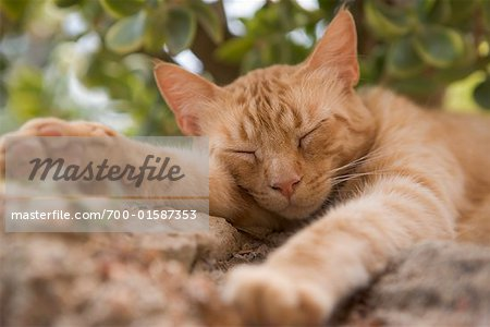 Sleeping Cat Stock Photo - Rights-Managed, Image code: 700-01587353