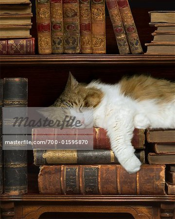 Cat Sleeping on Bookshelf